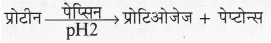 RBSE Solutions for Class 10 Science Chapter 2 मानव तंत्र image - 19