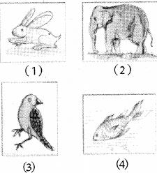 RBSE Solutions for Class 5 Environmental Studies Chapter 8 जीव-जन्तुओं की निराली दुनिया 1