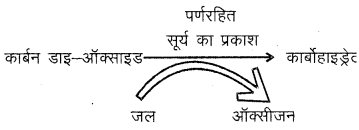 RBSE Solutions for Class 6 Science Chapter 2 पादपों में पोषण 5