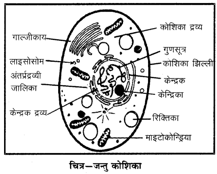 RBSE Solutions for Class 6 Science Chapter 7 कोशिका 2