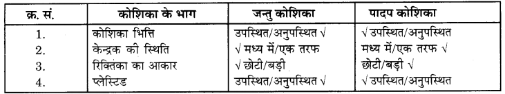 RBSE Solutions for Class 6 Science Chapter 7 कोशिका 4