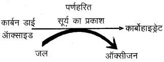 RBSE Solutions for Class 6 Science Chapter 9 पौधों के प्रकार एवं भाग 4