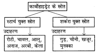 RBSE Solutions for Class 7 Science Chapter 1 भोजन के अवयव 3