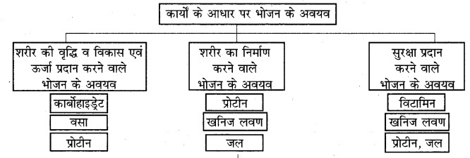 RBSE Solutions for Class 7 Science Chapter 1 भोजन के अवयव 5
