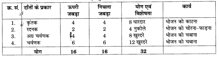 RBSE Solutions for Class 7 Science Chapter 2 प्राणियों में पोषण 7