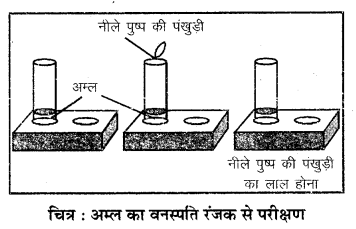 RBSE Solutions for Class 7 Science Chapter 5 अम्ल, क्षारक एवं लवण 6