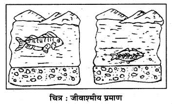 RBSE Solutions for Class 7 Science Chapter 7 जैव विकास 4