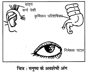 RBSE Solutions for Class 7 Science Chapter 7 जैव विकास 6