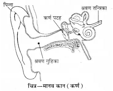 RBSE Solutions for Class 8 Science Chapter 10 ध्वनि 7