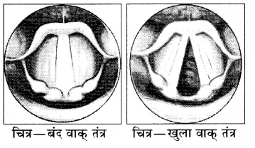 RBSE Solutions for Class 8 Science Chapter 10 ध्वनि 9