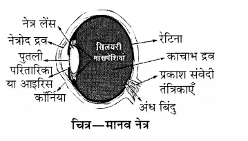 RBSE Solutions for Class 8 Science Chapter 14 प्रकाश का अपवर्तन 4