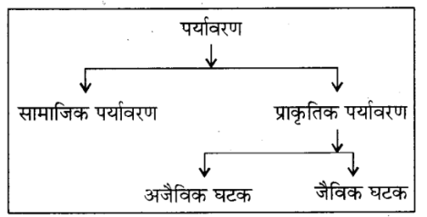 RBSE Solutions for Class 8 Science Chapter 17 पर्यावरण 1