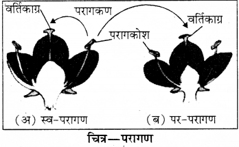 RBSE Solutions for Class 8 Science Chapter 6 पौधों में जनन 12