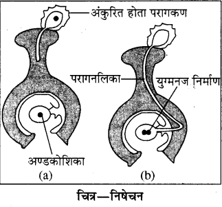 RBSE Solutions for Class 8 Science Chapter 6 पौधों में जनन 6
