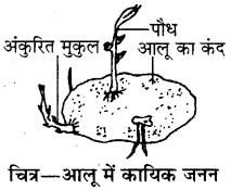 RBSE Solutions for Class 8 Science Chapter 6 पौधों में जनन 7