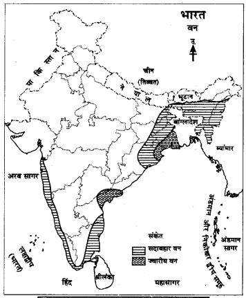 RBSE Solutions for Class 9 Social Science Chapter 15 भारत की प्राकृतिक वनस्पति एवं मृदाएँ। 5