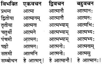 RBSE Class 8 Sanskrit व्याकरण संज्ञा शब्द 2