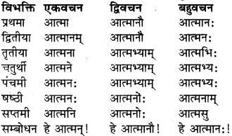 RBSE Class 9 Sanskrit व्याकरण रूप-प्रकरणम् 8