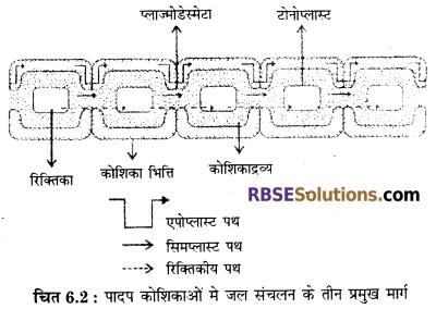 RBSE Solutions for Class 12 Biology Chapter 6 पादपों में जल अवशोषण व रसारोहण 1