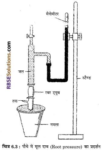 RBSE Solutions for Class 12 Biology Chapter 6 पादपों में जल अवशोषण व रसारोहण 3