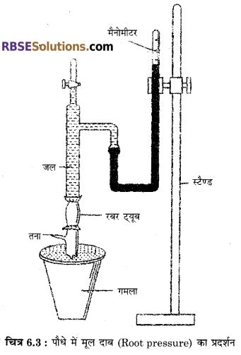 RBSE Solutions for Class 12 Biology Chapter 6 पादपों में जल अवशोषण व रसारोहण 5