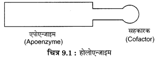 RBSE Solutions for Class 12 Biology Chapter 9 3Q.1