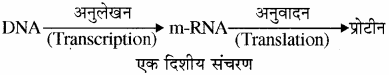 RBSE Solutions for Class 11 Biology Chapter 12 आण्विक जीवविज्ञान img-1