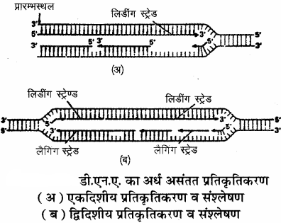 RBSE Solutions for Class 11 Biology Chapter 12 आण्विक जीवविज्ञान img-11