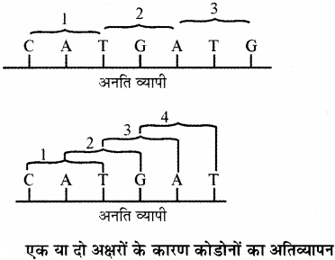 RBSE Solutions for Class 11 Biology Chapter 12 आण्विक जीवविज्ञान img-18