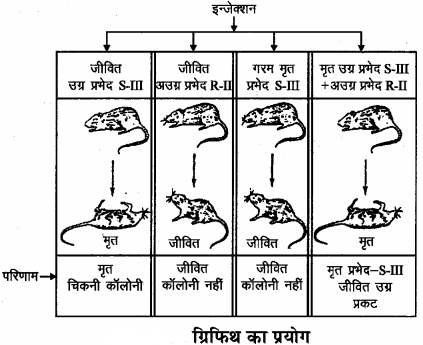 RBSE Solutions for Class 11 Biology Chapter 12 आण्विक जीवविज्ञान img-4