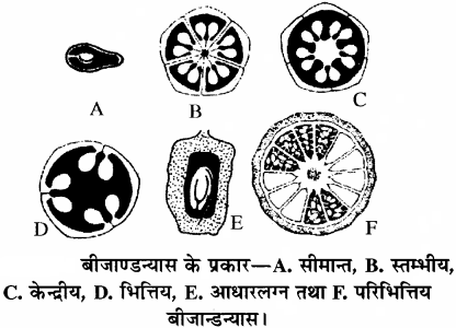 RBSE Solutions for Class 11 Biology Chapter 21 पुष्प img-11