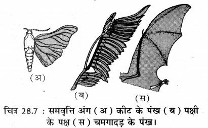 RBSE Solutions for Class 11 Biology Chapter 28 जीवन की उत्पत्ति एवं जैव विकास img-3