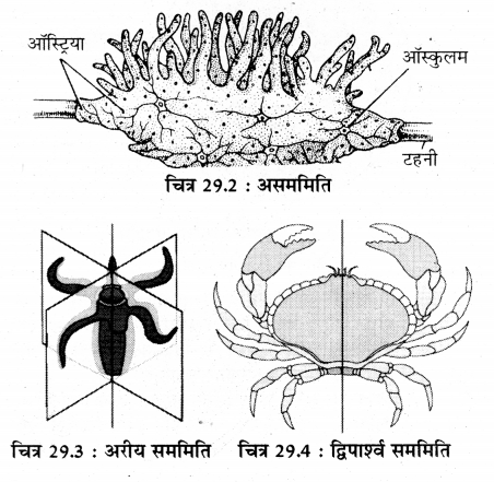 RBSE Solutions for Class 11 Biology Chapter 29 जन्तुओं का वर्गीकरण img-3