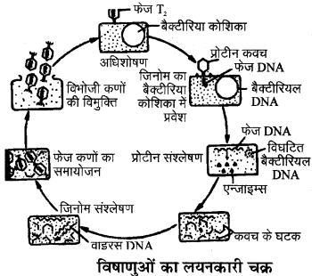 RBSE Solutions for Class 11 Biology Chapter 3 विषाणु या वाइरस img-3