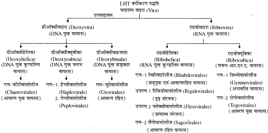 RBSE Solutions for Class 11 Biology Chapter 3 विषाणु या वाइरस img-5