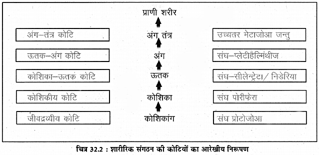RBSE Solutions for Class 11 Biology Chapter 32 शारीरिक संगठन की कोटियाँ img-3