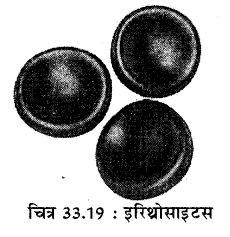 RBSE Solutions for Class 11 Biology Chapter 33 जन्तु ऊतक img-6