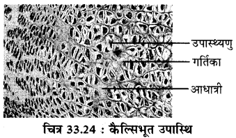 RBSE Solutions for Class 11 Biology Chapter 33 जन्तु ऊतक img-16