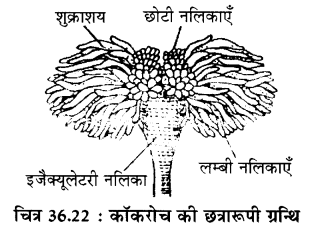 RBSE Solutions for Class 11 Biology Chapter 36 तिलचट्टा img-21