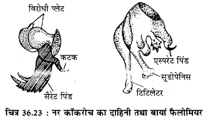 RBSE Solutions for Class 11 Biology Chapter 36 तिलचट्टा img-22