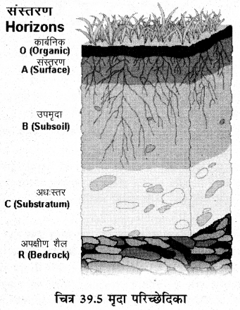 RBSE Solutions for Class 11 Biology Chapter 39 पर्यावरणीय कारक img-2