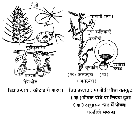 RBSE Solutions for Class 11 Biology Chapter 39 पर्यावरणीय कारक img-5