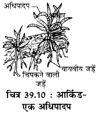 RBSE Solutions for Class 11 Biology Chapter 39 पर्यावरणीय कारक img-4