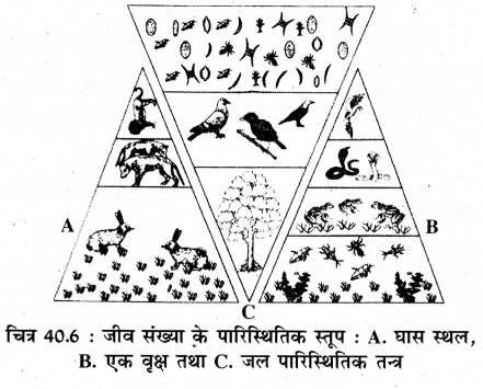 RBSE Solutions for Class 11 Biology Chapter 40 पारिस्थितिक तंत्र img-2