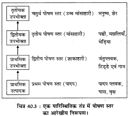 RBSE Solutions for Class 11 Biology Chapter 40 पारिस्थितिक तंत्र img-5