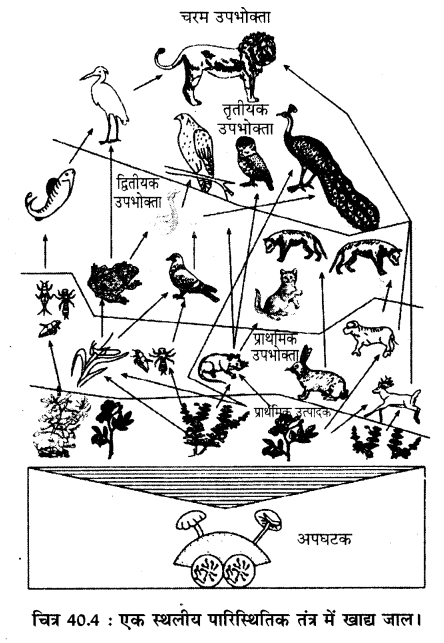 RBSE Solutions for Class 11 Biology Chapter 40 पारिस्थितिक तंत्र img-6