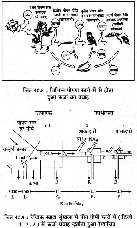 RBSE Solutions for Class 11 Biology Chapter 40 पारिस्थितिक तंत्र img-9