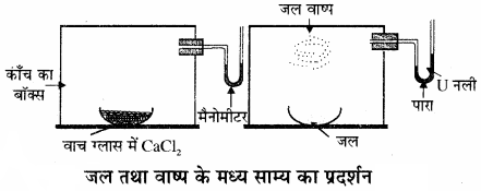 RBSE Solutions for Class 11 Chemistry Chapter 7 साम्य img 19