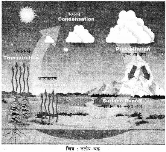 RBSE Solutions for Class 11 Physical Geography Chapter 17 जलीय चक्र एवं जलराशियों का वितरण