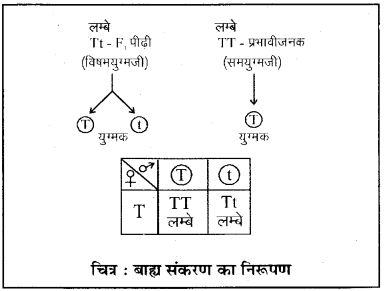 RBSE Class 10 Science Board Paper 2018 image 12